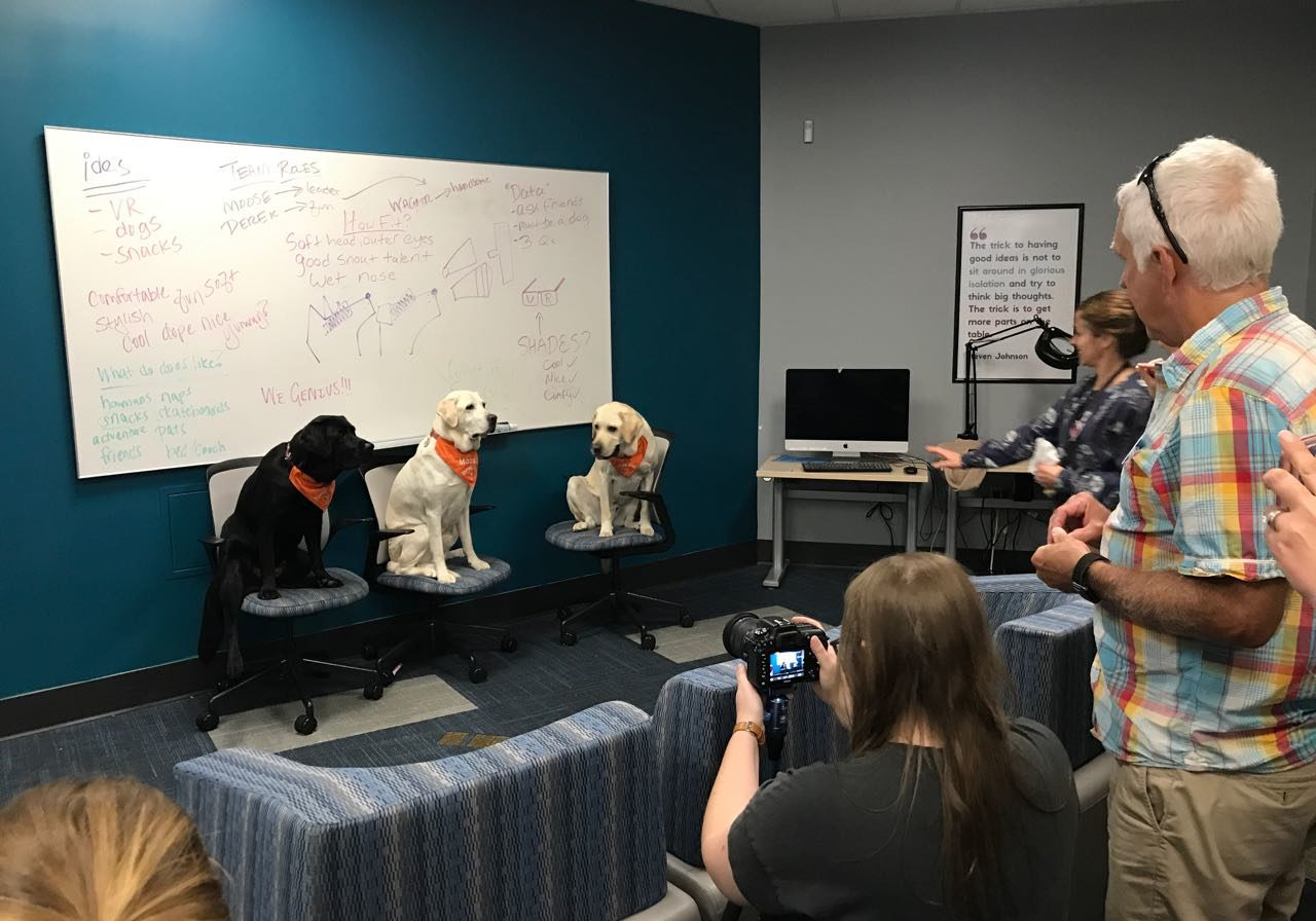 Three dogs sitting on chairs in front of a whiteboard while someone films them